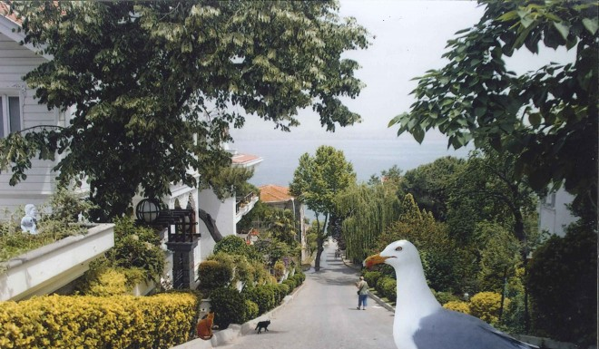 my_street_meral_agar